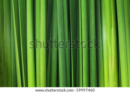 Green leaf background abstract - stock photo