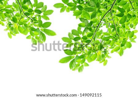 Green leaf background - border design - stock photo