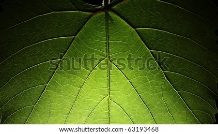 Green leaf background macro texture - stock photo