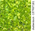 green leaf background. Seamless Tileable Texture - stock photo