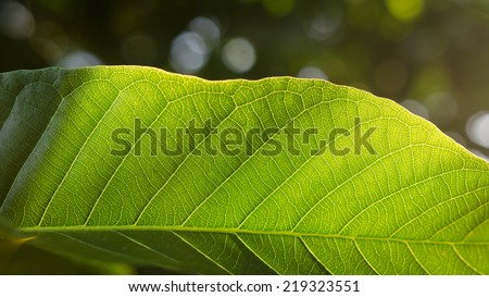 Green leaf background texture and copy space