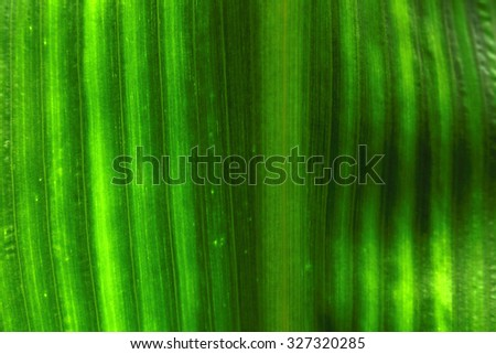 green leaf background texture in nature