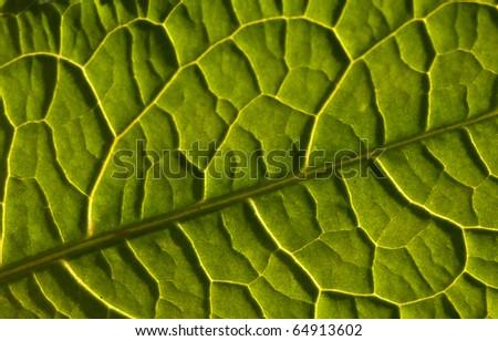 Green leaf background texture, macro - stock photo