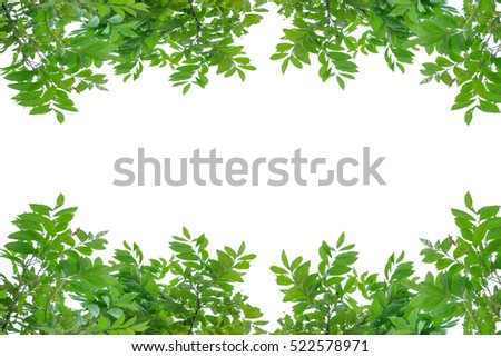 Green leaf Background Textures.