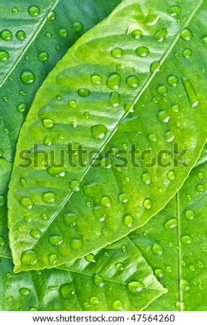 green leaf background with raindrops