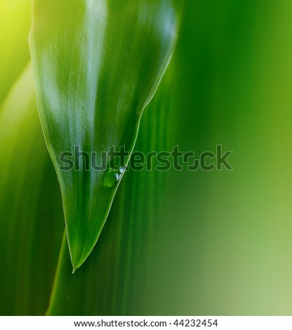 green leaf background with water drop - stock photo