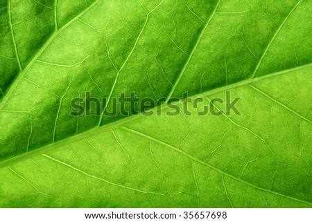 green leaf close up - stock photo