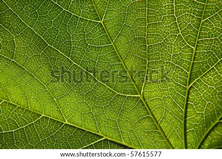 Green leaf close-up - stock photo