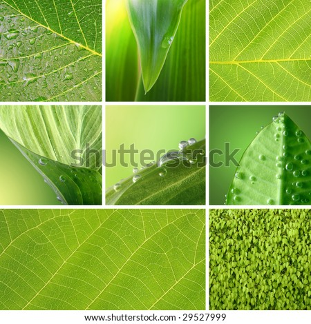 green leaf collection - stock photo