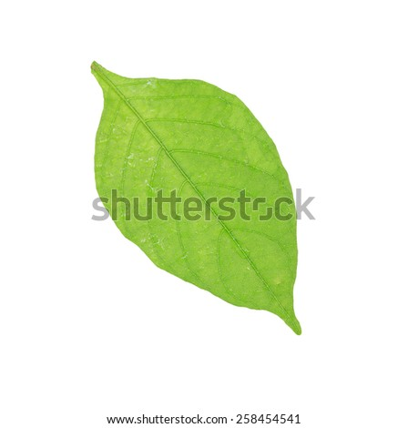 Green leaf fresh macro image after rain.This has clipping path.