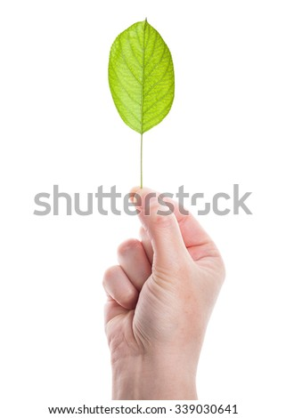 Green leaf in hand isolated on white background  - stock photo