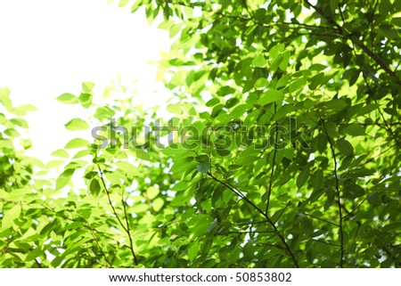 Green leaf in outdoor parks - stock photo