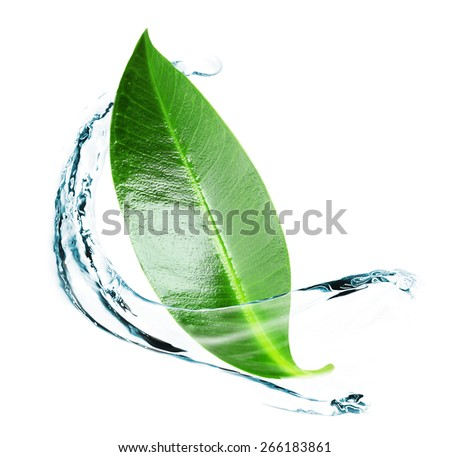 Green leaf in water splashes isolated on white - stock photo