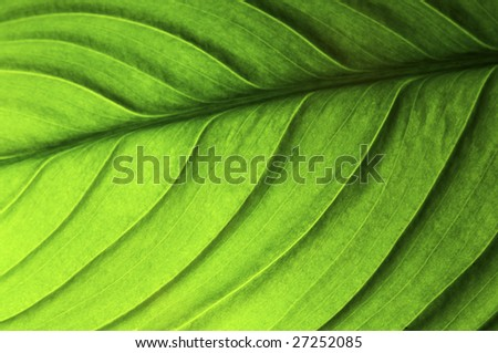 Green Leaf isolated on a black background - stock photo