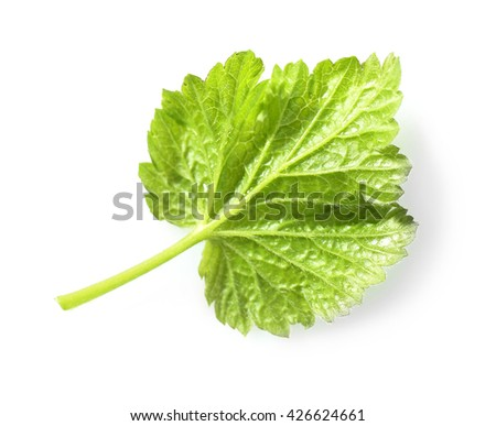 Green leaf isolated on white - stock photo
