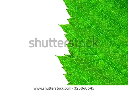 Green Leaf Isolated On White./ Green Leaf Isolated On White. - stock photo