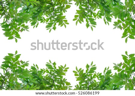 Green leaf isolated white Background Textures.