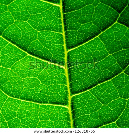 Green leaf itexture close up - stock photo