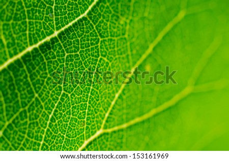 green leaf macro as a background - stock photo