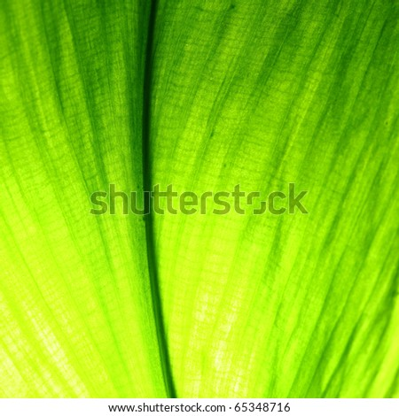 green leaf macro close up - stock photo