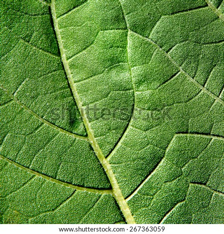 Green Leaf Macro Detail Background Texture - stock photo