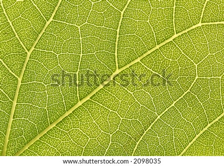 Green Leaf 1:1 Macro - Great Detail (grunge texture) - stock photo