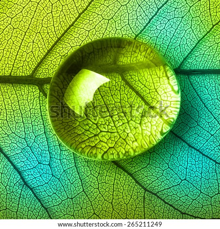 Green leaf macro, soft focus on water drop. Shallow depth of field. - stock photo