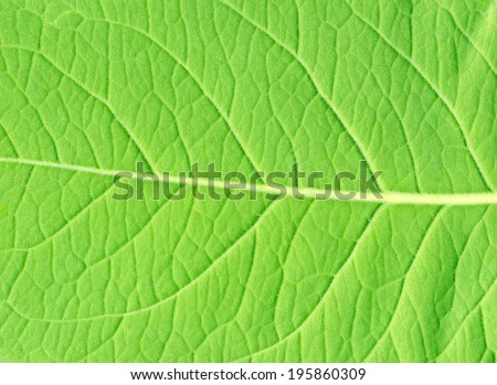 Green leaf of a plant close up - stock photo