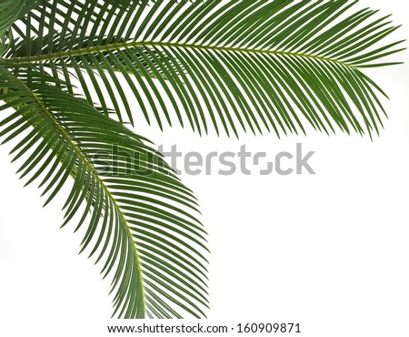 Green leaf of palm tree , border frame , on white background - stock photo