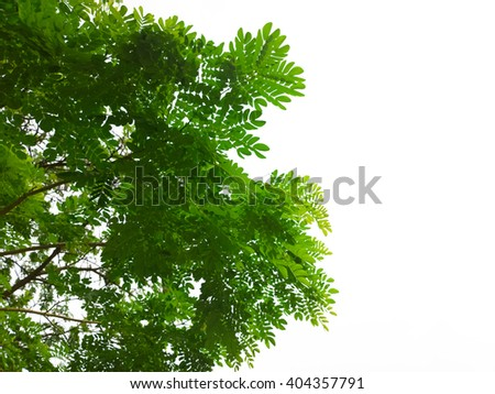 Green leaf of tree isolated on white background.