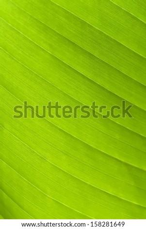 green leaf on a gleam - stock photo