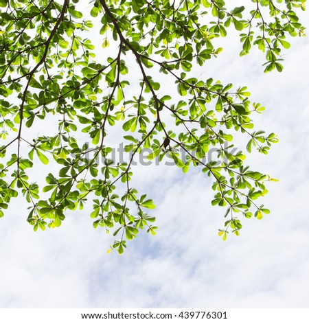 green leaf on blue sky - stock photo