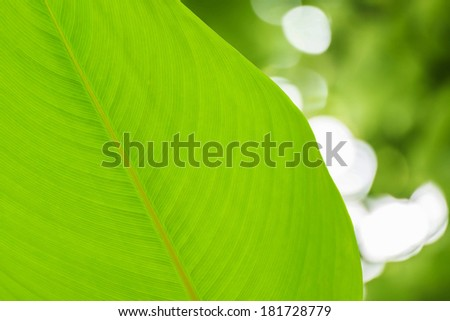 green leaf on green bright bokeh background