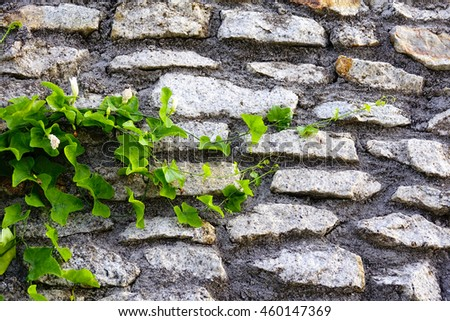 green leaf on stone concrete wall background,select focus with shallow depth of field:ideal use for background - stock photo