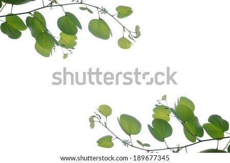 green leaf on white background.