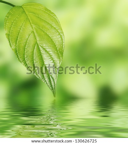 Green leaf over water spa setting - stock photo