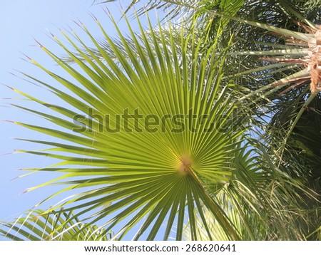 Green leaf palm tree closeup - stock photo