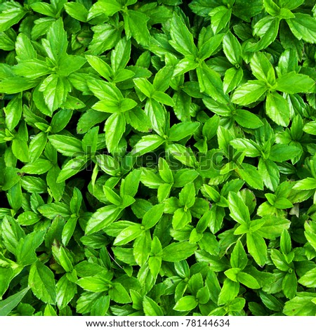 Green leaf pattern stock - stock photo