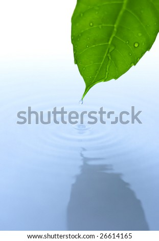 Green leaf reflected in surface with water drop - stock photo