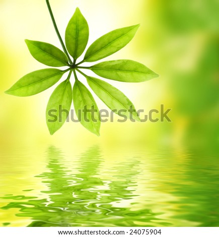 Green leaf reflected in water - stock photo
