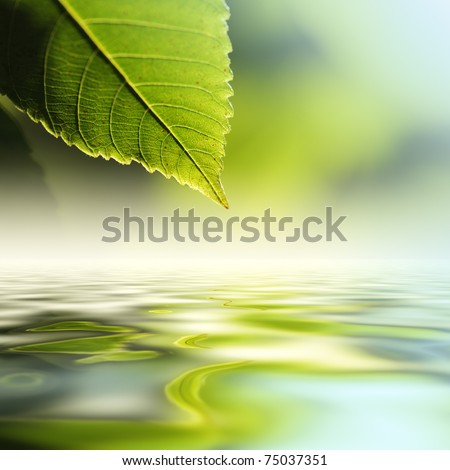 Green leaf reflecting in river water, closeup. Copyspace. - stock photo