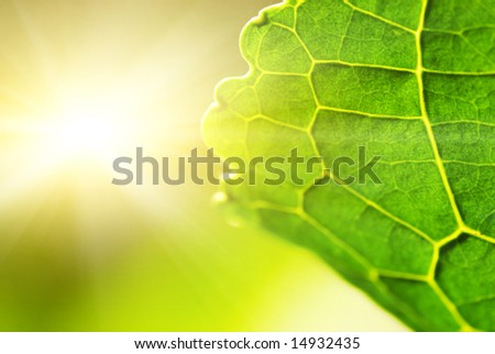 Green leaf (shallow DoF) - stock photo