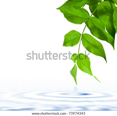 Green leaf single with drop fall in water - stock photo