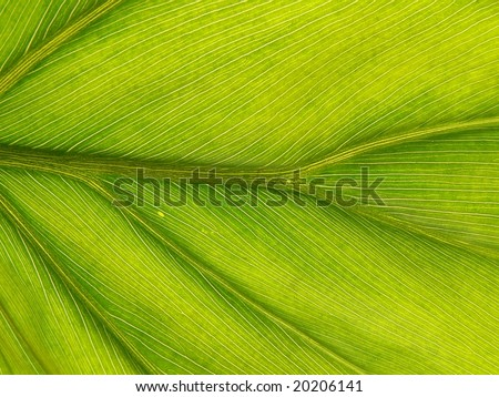 Green leaf structure background - stock photo
