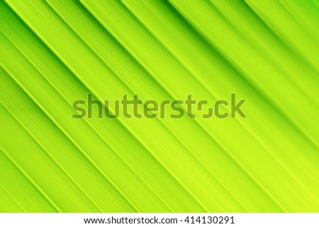 Green leaf surface, close-up, background - stock photo