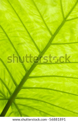 Green leaf surface macro shot , shallow DOF and  Adobe RGB color profile used for output JPG file - stock photo