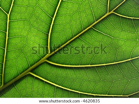 Green leaf texture - stock photo