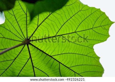 Green leaf texture, abstract background