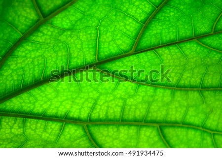 Green leaf texture, abstract background. Natural  pattern