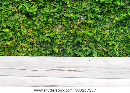 green leaf texture and wood background - stock photo